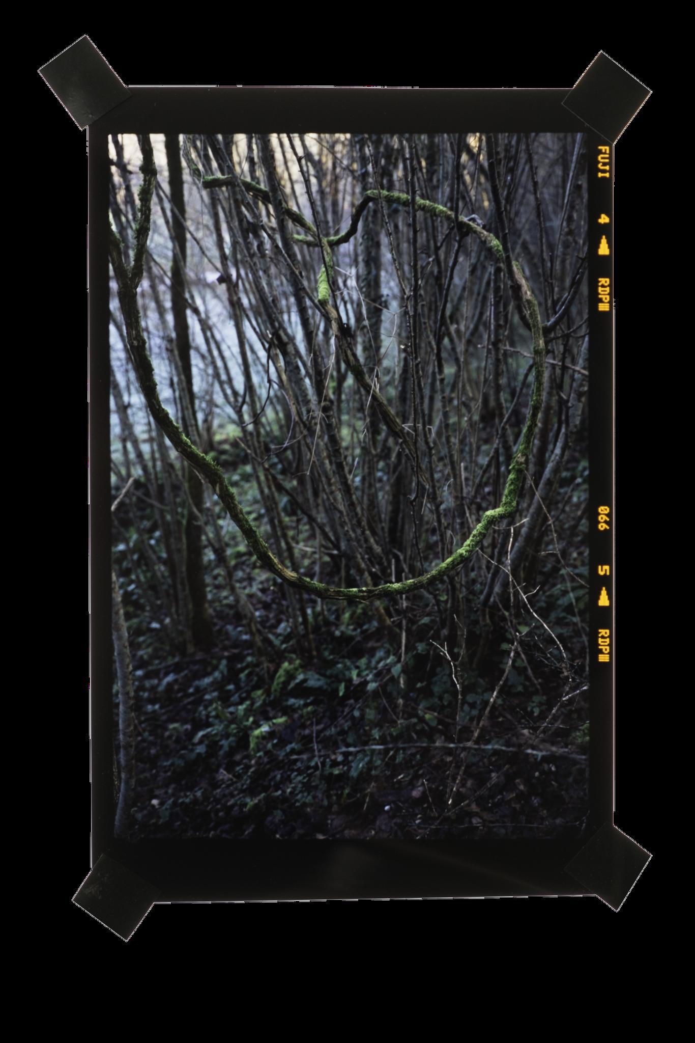 Film inversible 6x9