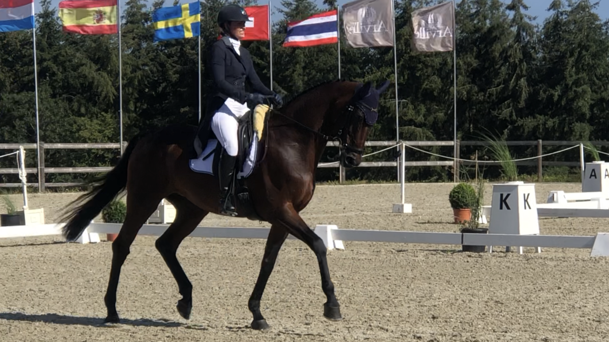 Arville 2020 CCI 4* S