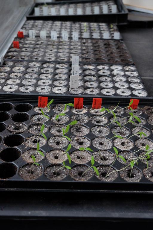 Les semences germent :)