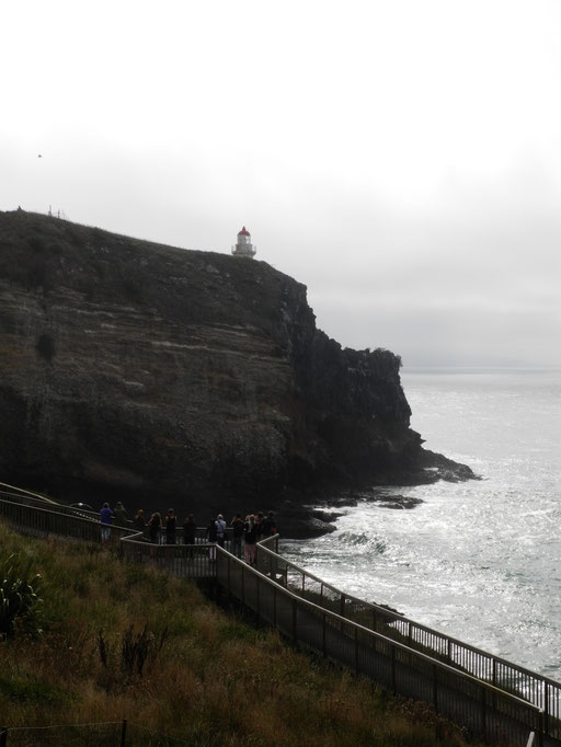 Lighthouse/Taiaroa Head