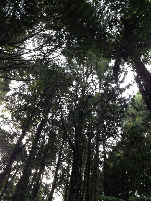 Trounson Kauri Park
