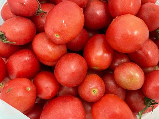 タイトマト