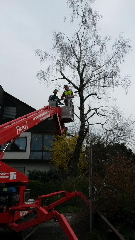 Dach- und Fassadenfreischnitt