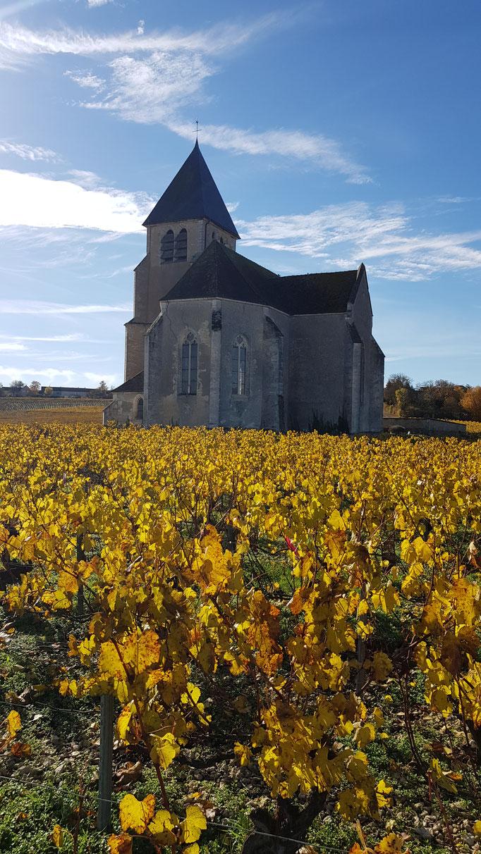 Suspensions fantastique Domaine Jean Marc Brocard création et realisation Hervé Arnoul. Making of grappe  été.