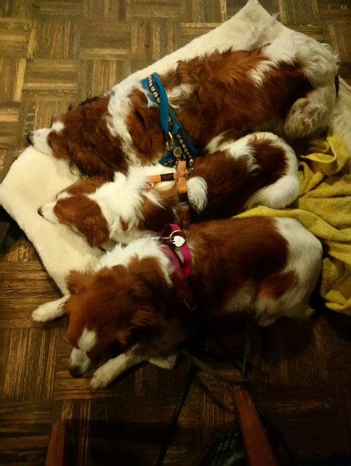 Platz ist auf der kleinsten Decke...Die Hondjes im Essenslokal.