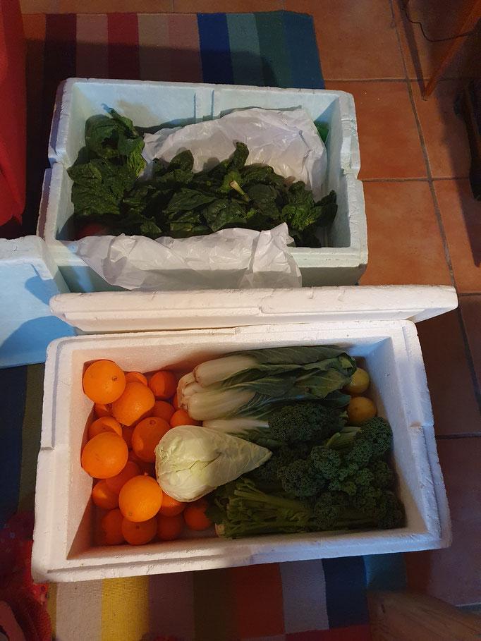 Bio-Gemüsekiste von Rengo - hausgeliefert