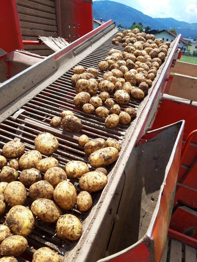 Auf dem Kartoffelroder Juni 2020