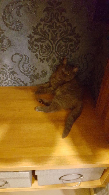 Katze erkundet