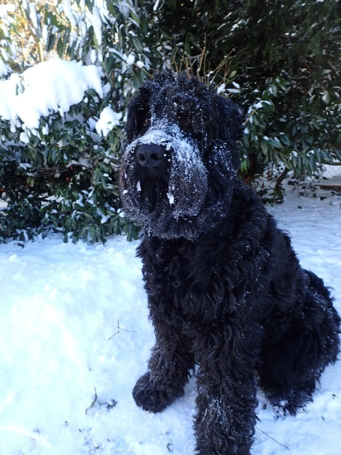 Yuma geniest die Schneepracht
