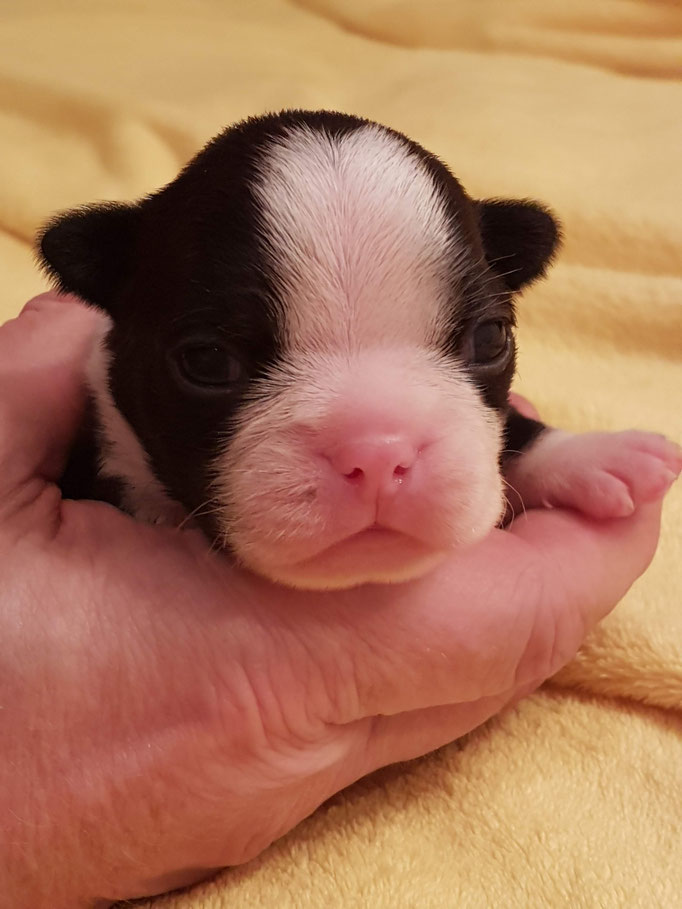 Romulus 2 Wochen