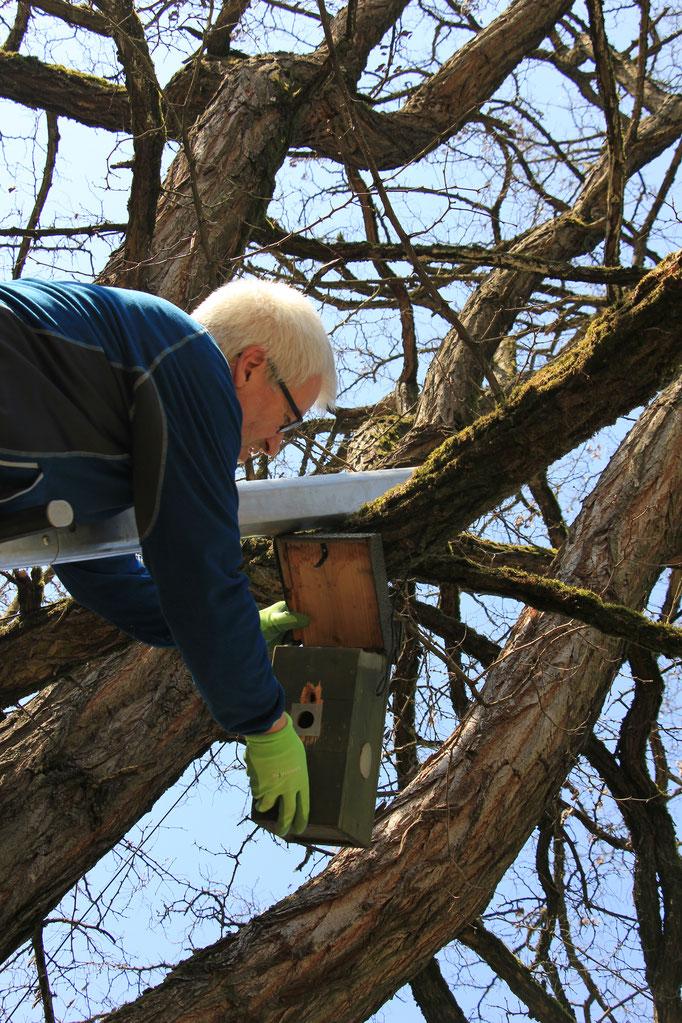 Überprüfen das Kastens am Baum (Foto: R. Budig)
