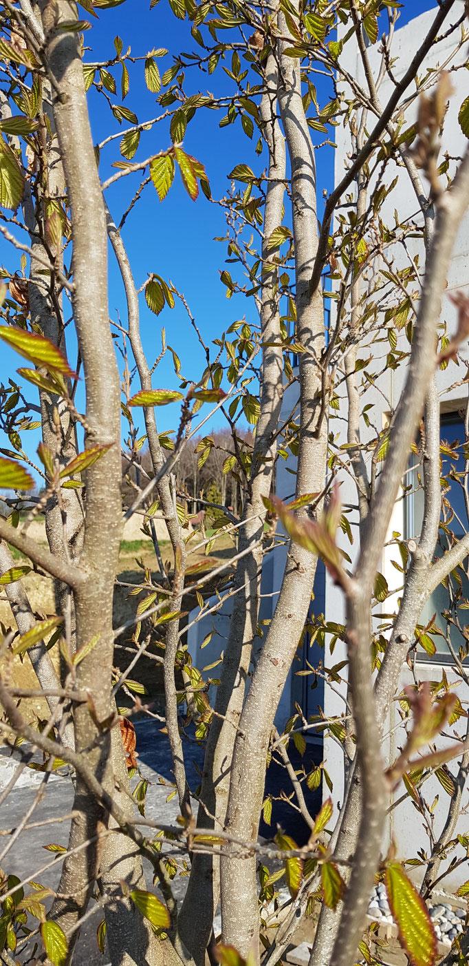 Haus Garten Mühleberg rosshäusern