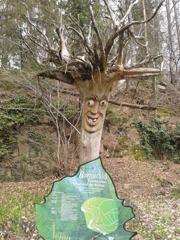 Über den Bannwald bei der Ruine Liebeneck