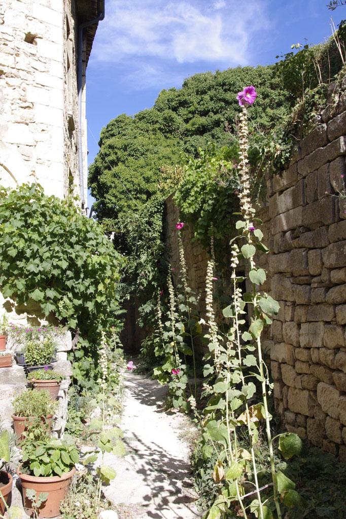 ruines et herbes folles