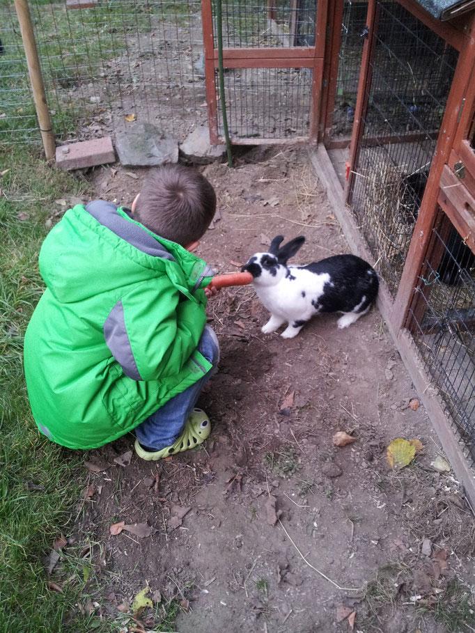 Gehegehaltung kommt nicht nur den Häschen zugute. Man kann sich frei mit den Tieren bewegen. Optimal ist auch eine Sitzgelegenheit, wie z.B. ein Hocker zum Verweilen