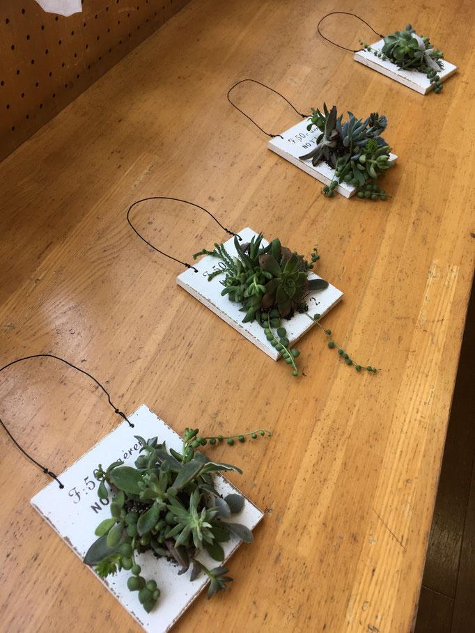 フレッシュフラワークラス 多肉植物のタブロー