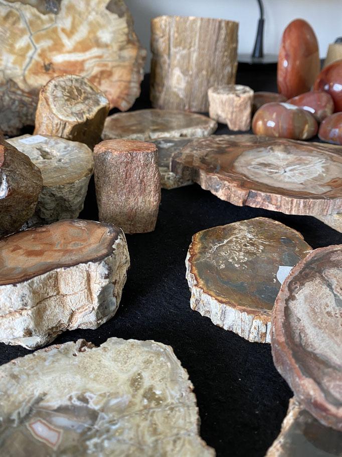 Bois fossile - Nimalaé - Lithothérapie et boutique de pierres et cristaux