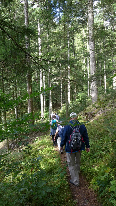 Auf weichen Waldwegen bergab