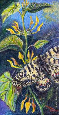 """Nine Winderlich, Malerei, """"ZarterWind"""" Der Schmetterling Osterluzeifalter flattert an den Blüten der Osterluzei-Pflanze."""