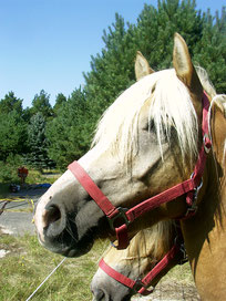 ROSSI Pferdeschinken Pferdesalami Pferdefelle