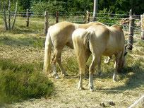 ROSSI Pferdeschinken Pferdewurst Pferdefelle