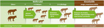 Wolfsrudel - Grafik NABU