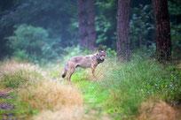 Wolf-MT6 Foto Juergen Borris