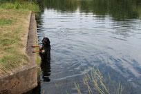 Leon entsteigt dem Wasser