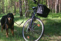 Hovawart am Fahrrad