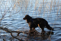Leon knietief im Wasser