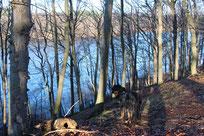 Blick über den Liepnitzsee