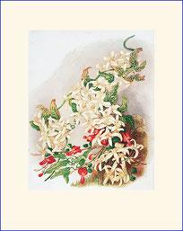 Botanical print, Phormium