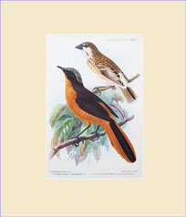 robin-chat