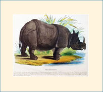 rhinoceros, SPCK