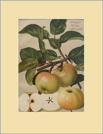 Weisser Klar-Apfel