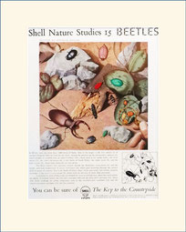 Shell, beetles
