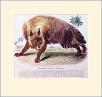 hyena, SPCK