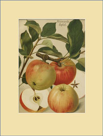 Bismarck Apple
