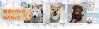かもい動物病院のキャンペーンや獣医療に関する情報いっぱい!