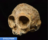 evolution news ape human ancestor