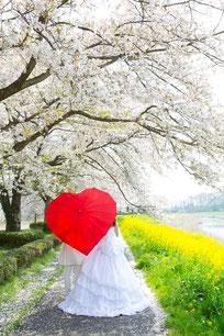 ドレス桜ロケ