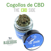 comprar cogollos cbd big seeds