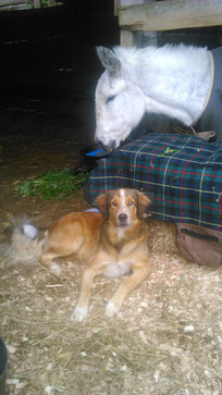 Bobby passt auf Daphne auf, November 2015