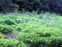 湿地回復作業予定地の例