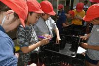 種を植える矢切小学校の児童たち