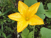 英語村の中庭の花、名前教えて下さい。