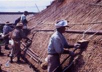 葦葺き作業