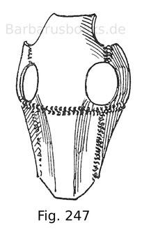 Fig. 247. Arabischer Rosskopf, aus sechs Platten bestehend, welche durch Streifen aus Panzergeflecht verbunden sind. Museo Poldi-Pezzoli in Mailand.