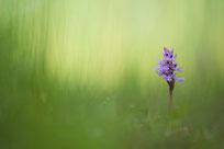 Thema Wildblumen. Foto: Wilfried Vogel