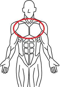 バストアップの筋肉